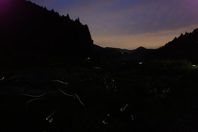 蛍の光跡撮影