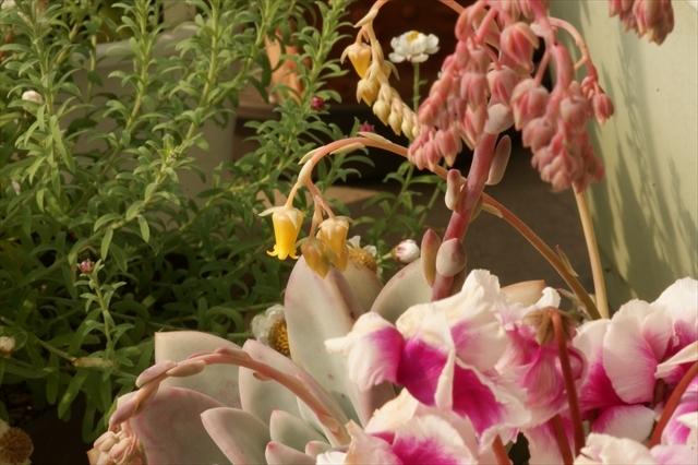 玄関先の草花-2