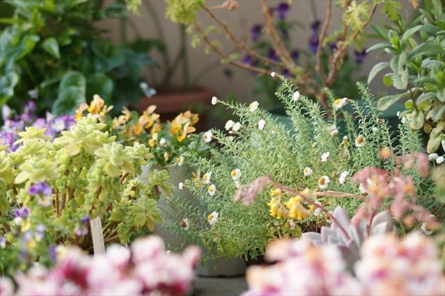 玄関先を埋め尽くす植物