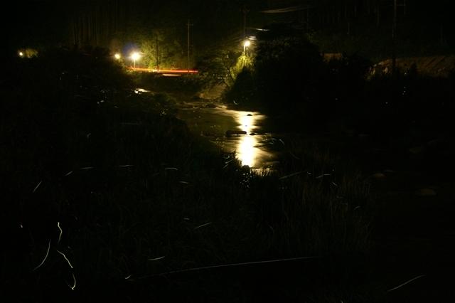 蛍の光跡 2011年撮影