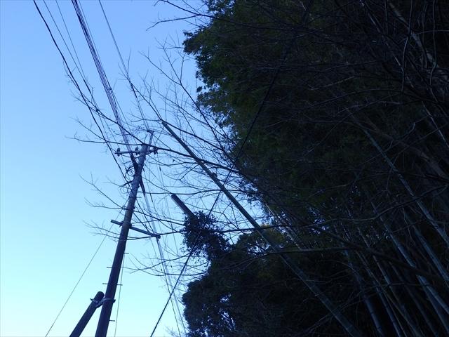 電線に持たれている竹