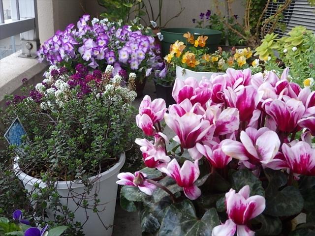 玄関先の植物