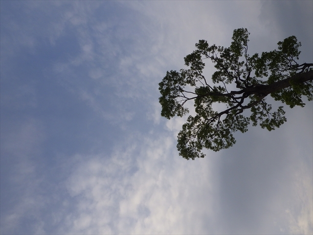 井尻川公園