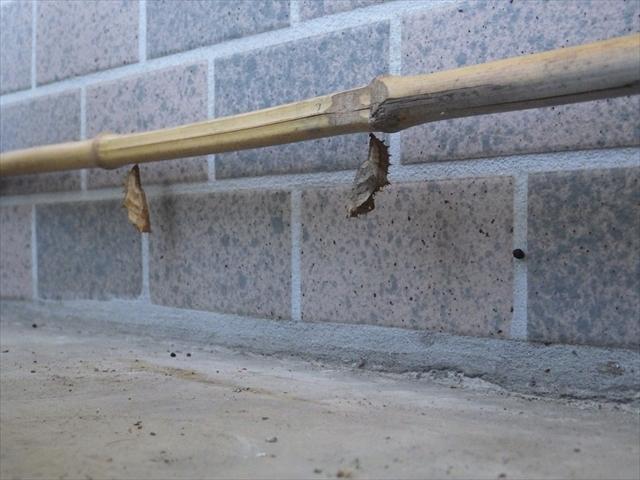 ツマグロヒョウモンの蛹