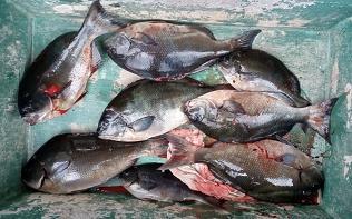 1月26日 白島その他魚