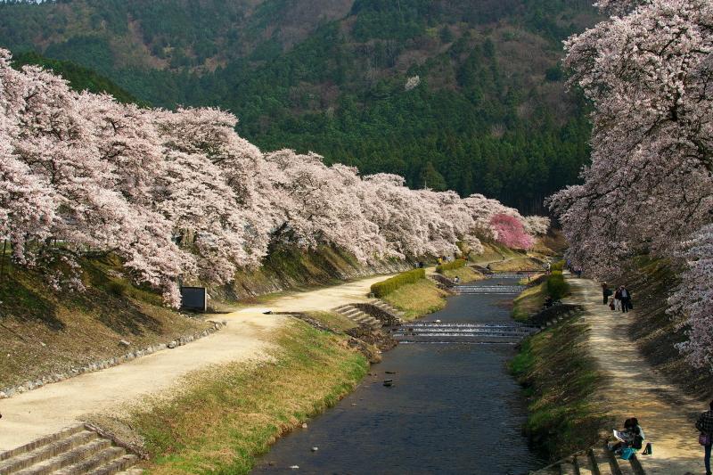 うぐい川 (2)