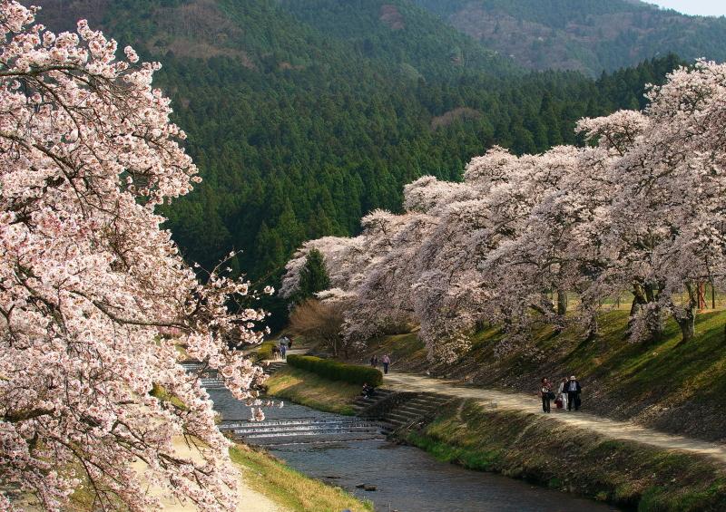うぐい川 (3)