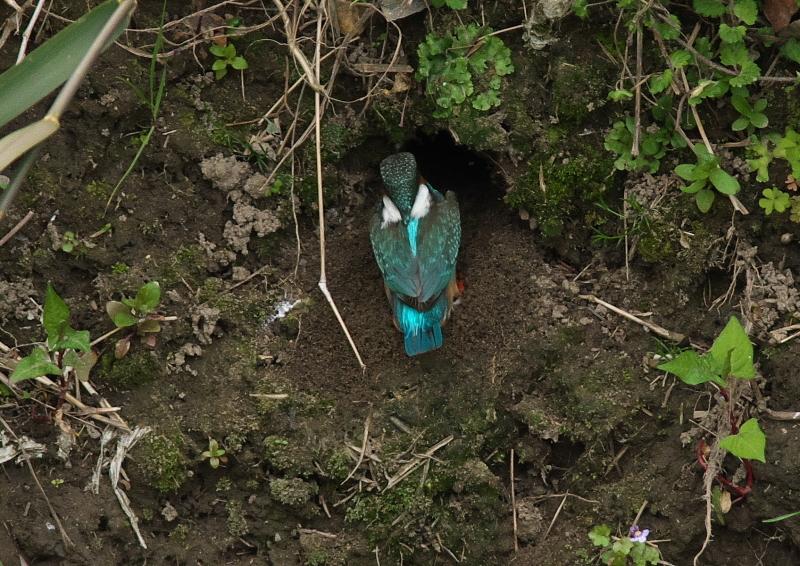♀穴掘り (1)