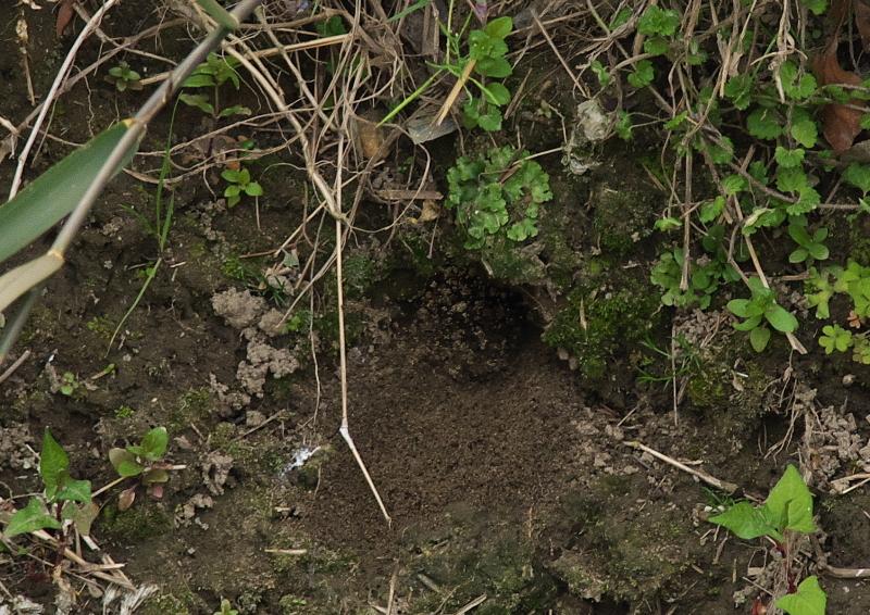 ♂穴掘り (4)