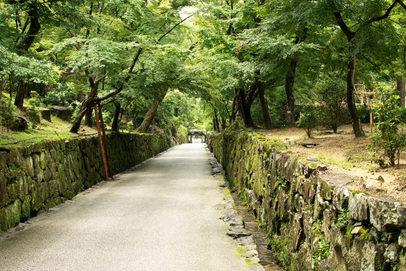 興聖寺 (5)