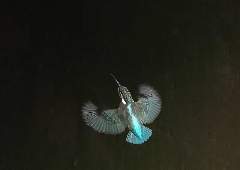 飛び姿 (3)