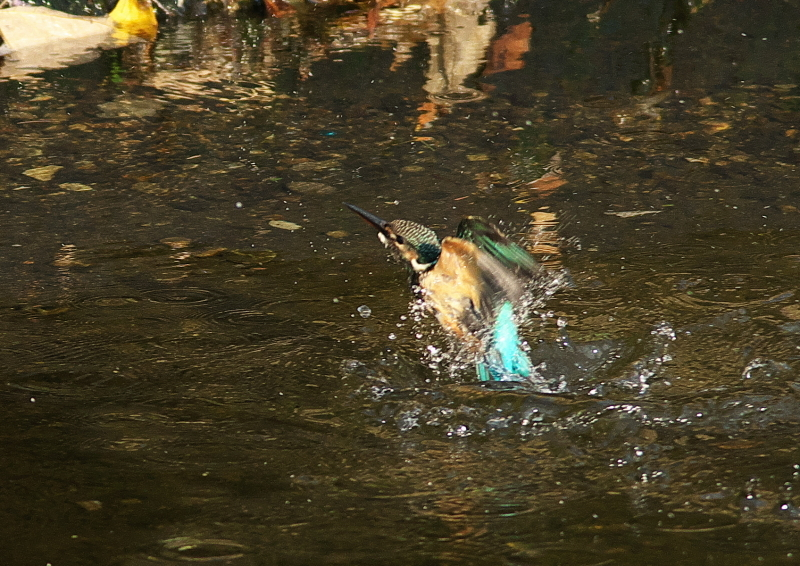 水浴び (6)