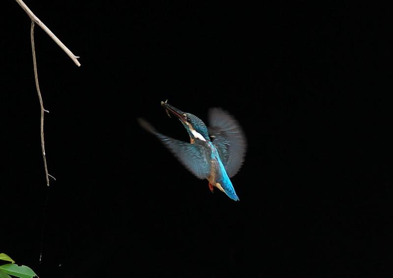 小さい魚 (9)