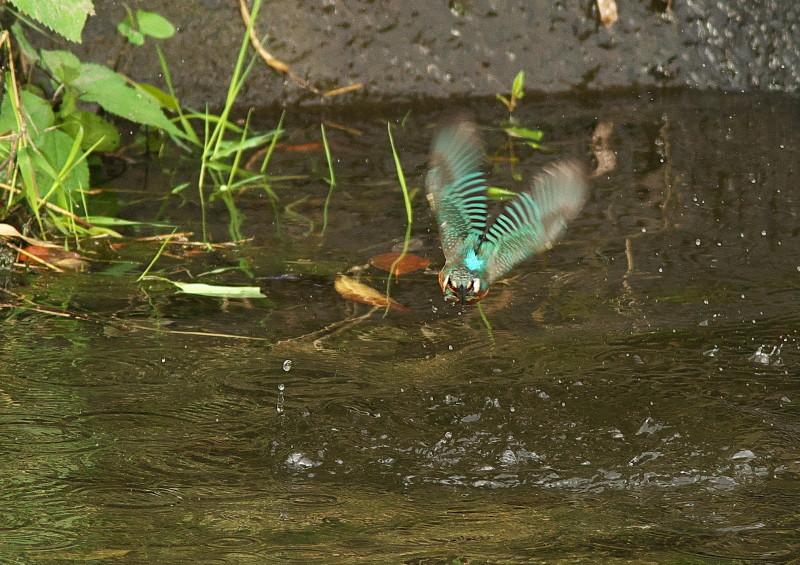小さな魚 (5)