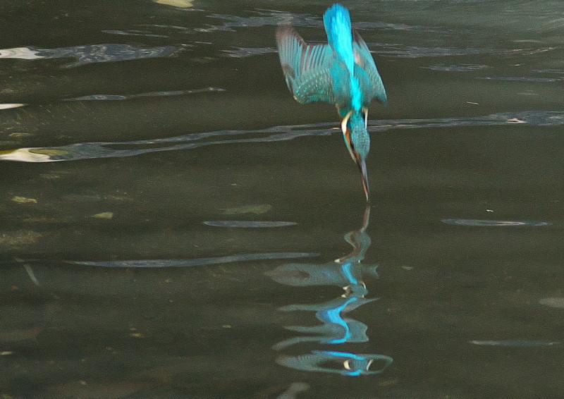 小さい魚 (1)