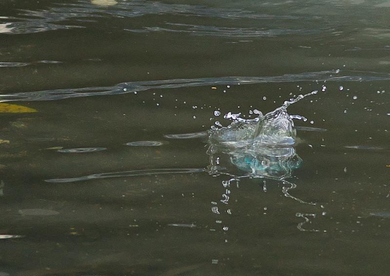 小さい魚 (2)