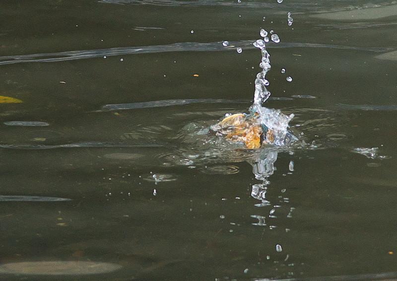 小さい魚 (4)