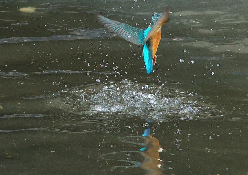 小さい魚 (6)