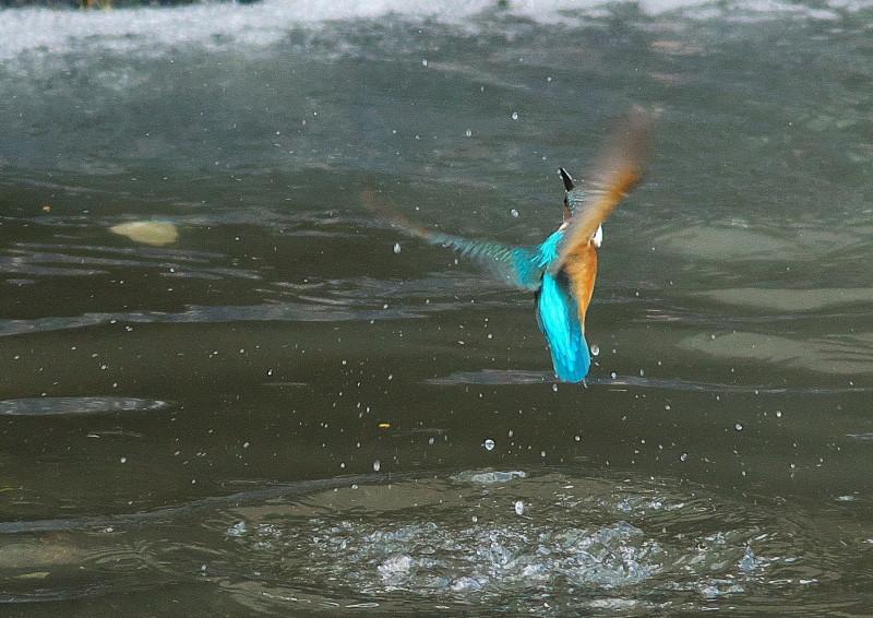 小さい魚 (7)
