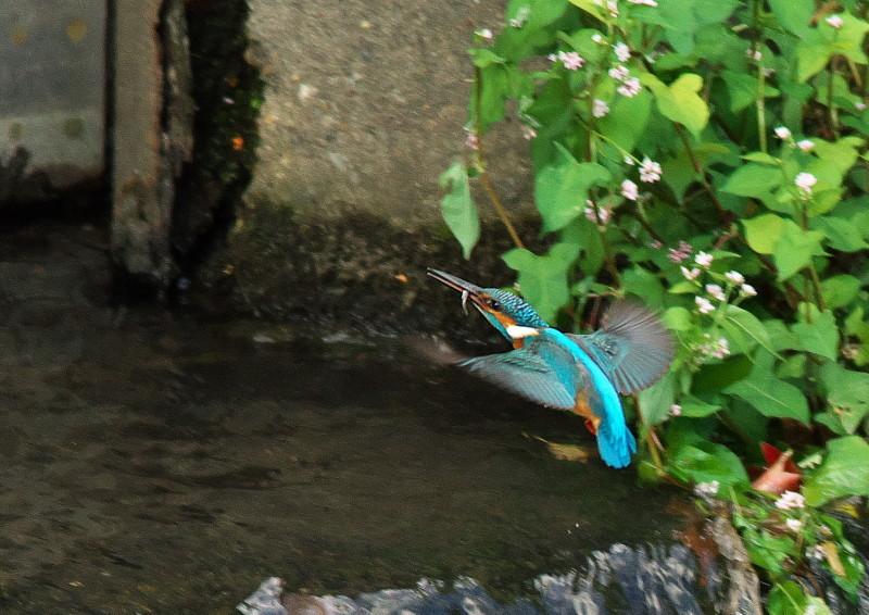 小魚 (6)