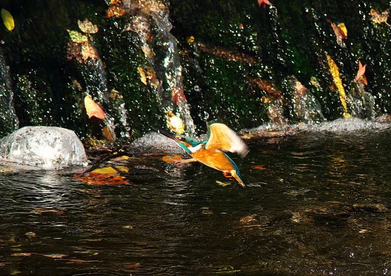 小魚 (5)