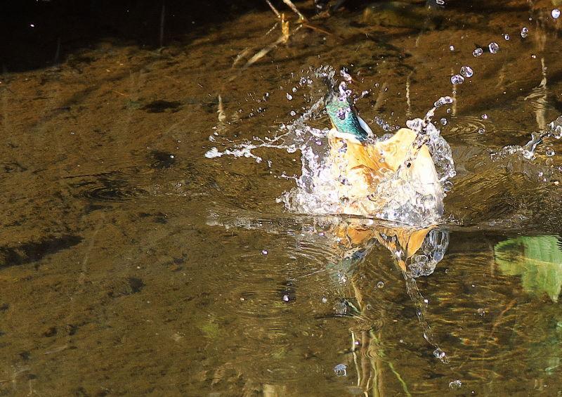 水浴び (3)