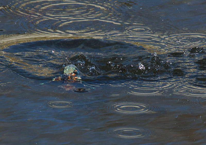 ピントが水面に (2)
