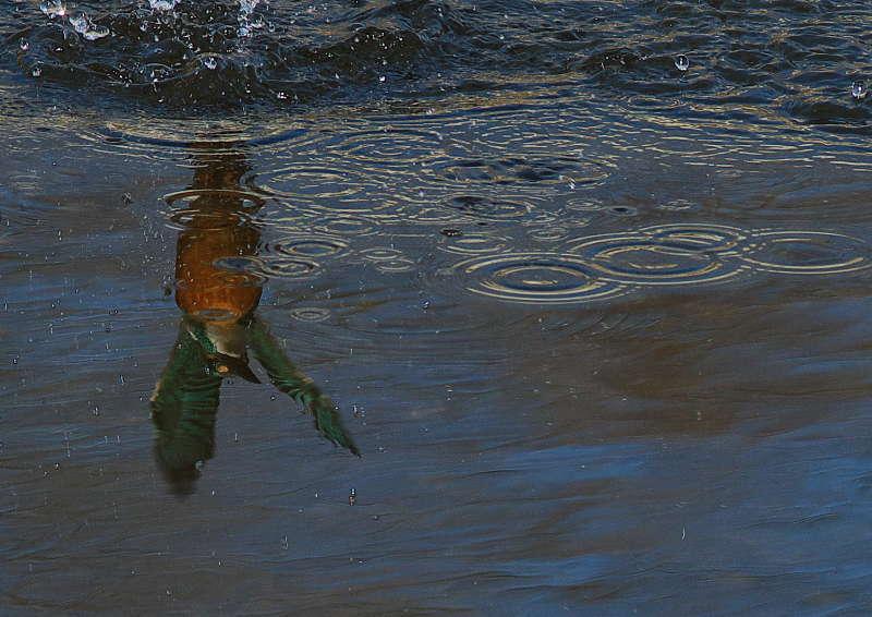 ピントが水面に (4)