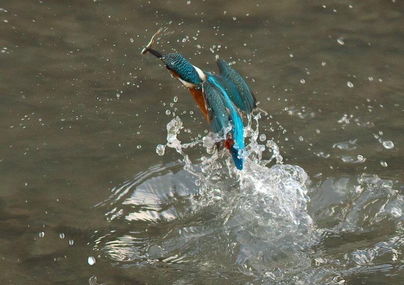 小魚 (1)
