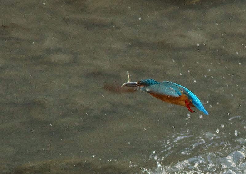 小魚 (2)