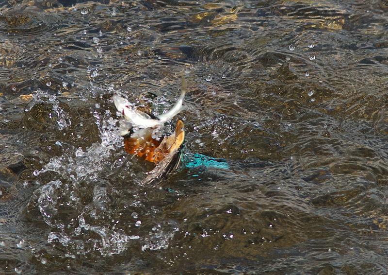 大漁 (2)
