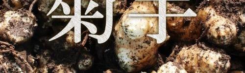 菊芋の画像B