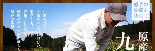 九州産の菊芋を使用した金の菊芋A