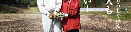 菊芋を手作りで栽培する農家B