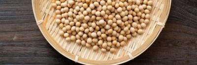 土壌菌に含まれる大豆イソフラボンのイメージB