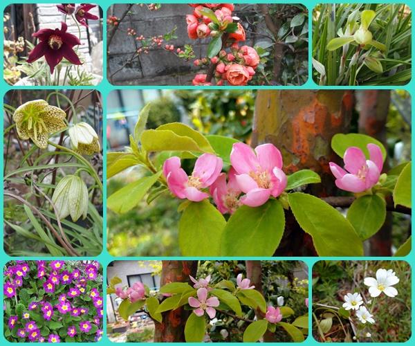 我が家の4月の花