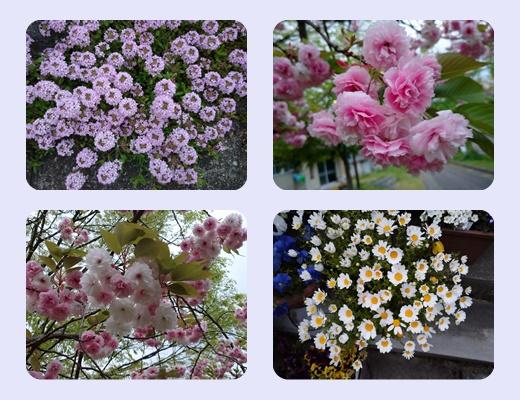 散歩道の花居合