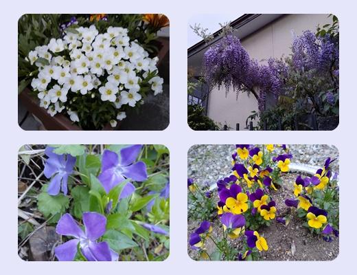 散歩道の花居合-2