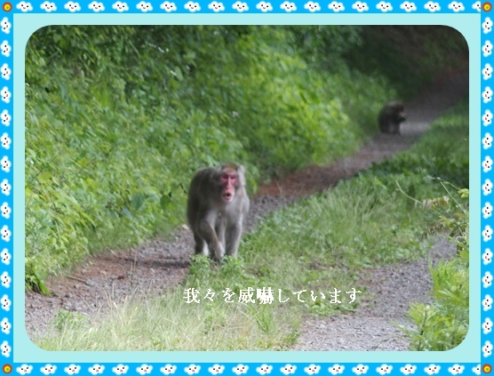 照南湖の猿