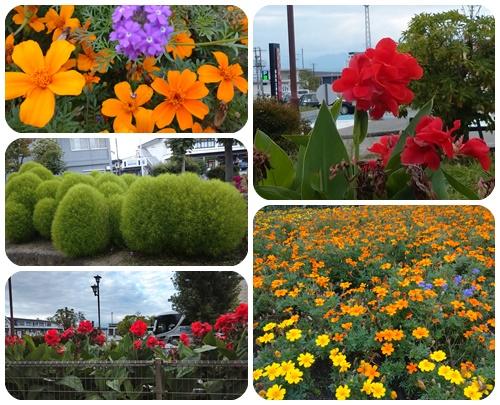 散歩道の花彩