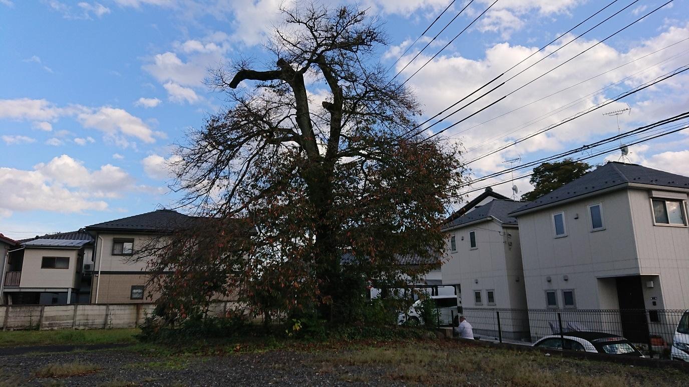 04 少し東に見える木