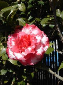 flower070215