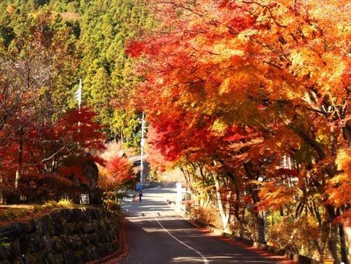城峯公園入口の紅葉