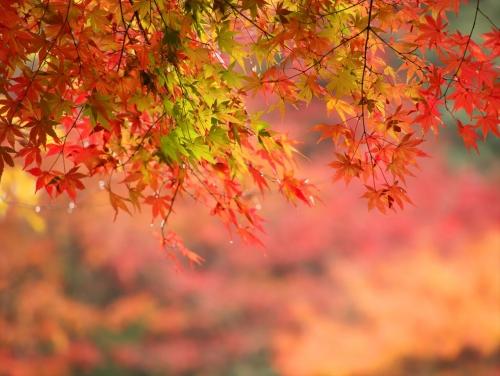 雨に煙る紅葉を楽しむ