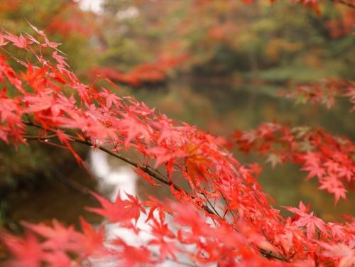 西田沼の紅葉