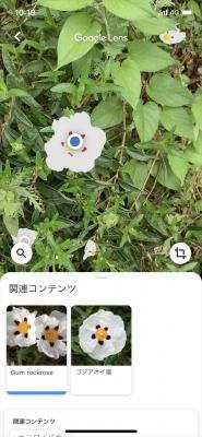 Googleレンズ10