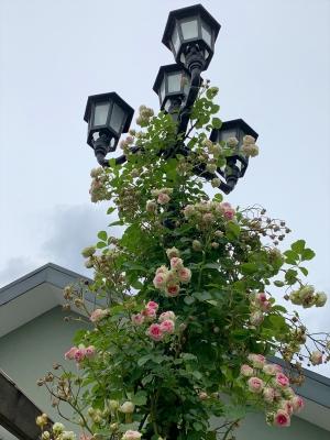 街灯とバラのアレンジ 素敵