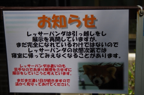 #福岡市動物園 #redpanda #レッサーパンダ #赤パンダ