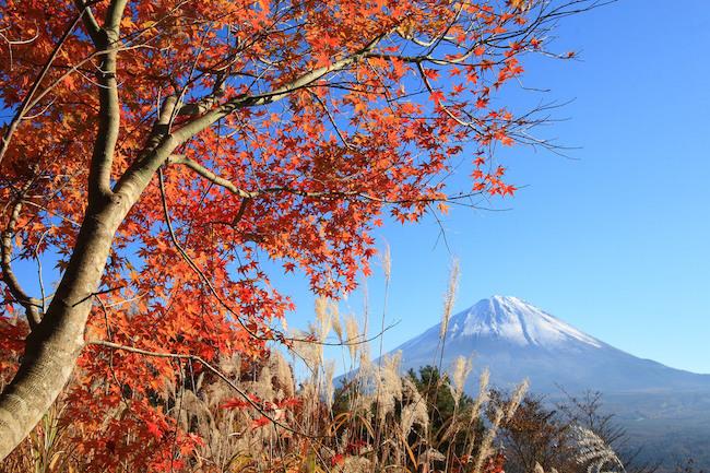20121102 flickr-3037881706