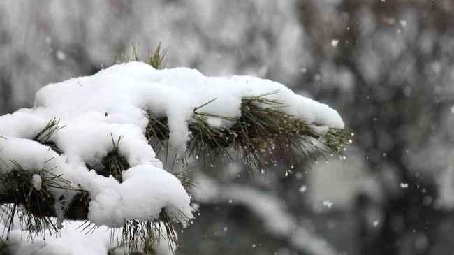 20200924 松に雪